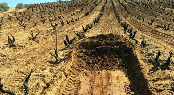 Excavaciones Vicente Lopez Roa
